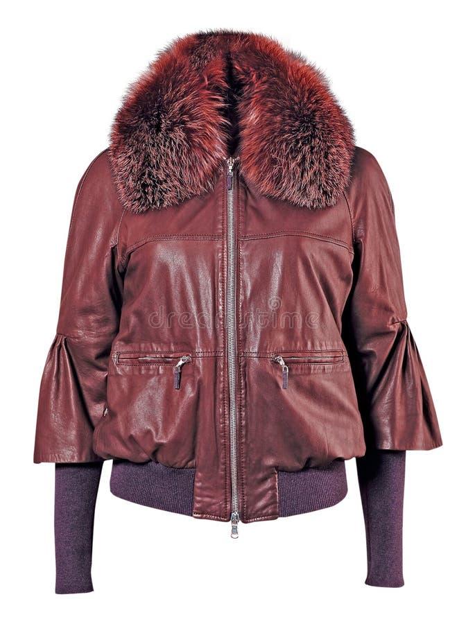 куртка шерсти ворота стоковые фотографии rf