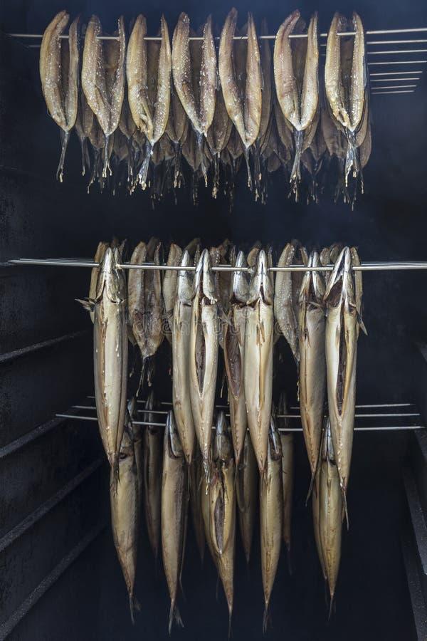 Куря рыбы - Нидерланды стоковое фото