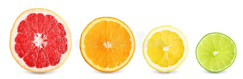 Куски известки, грейпфрута, апельсина и лимона стоковые изображения rf