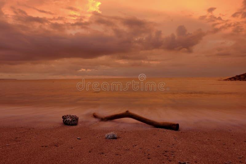 Кусок дерева на песке пляжа Kuta Бали на сумраке стоковые фото