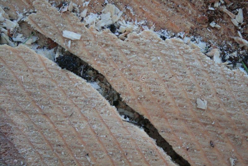 Кусок древесины подвергая кольца действию стоковое изображение
