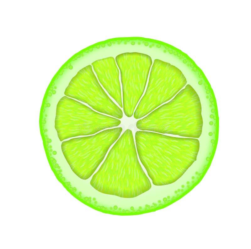 Кусок известки вектора реалистический Иллюстрация цитруса бесплатная иллюстрация