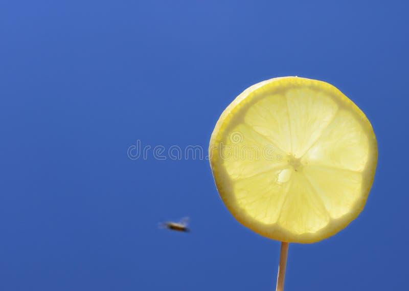 Кусок лимона перед солнцем с что-то летая вокруг стоковые фото