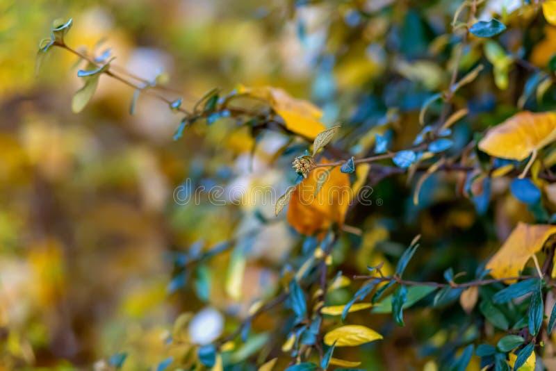 Кустарники и желтые листья r Предпосылка природы красивая запачканная r o r стоковое изображение rf