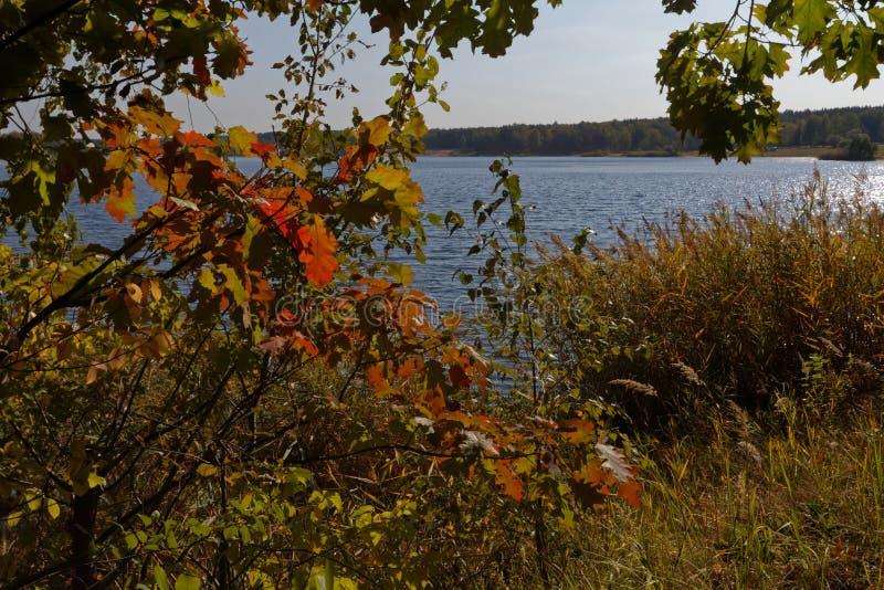 Кустарники осени на lakeshore стоковые изображения rf