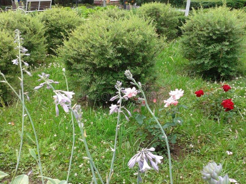 Кустарники, розы и другие цветки в парке стоковая фотография