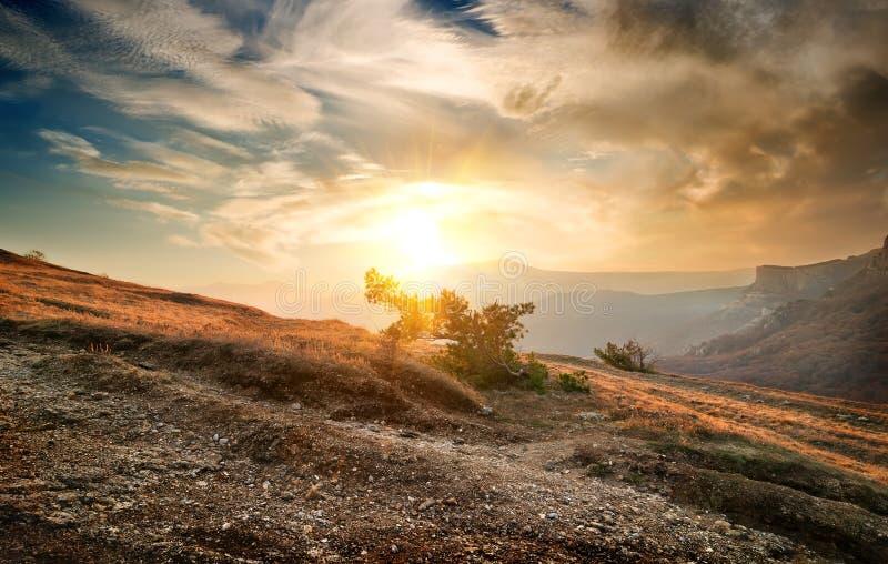Download Кустарник на горе стоковое фото. изображение насчитывающей характеристика - 37928092
