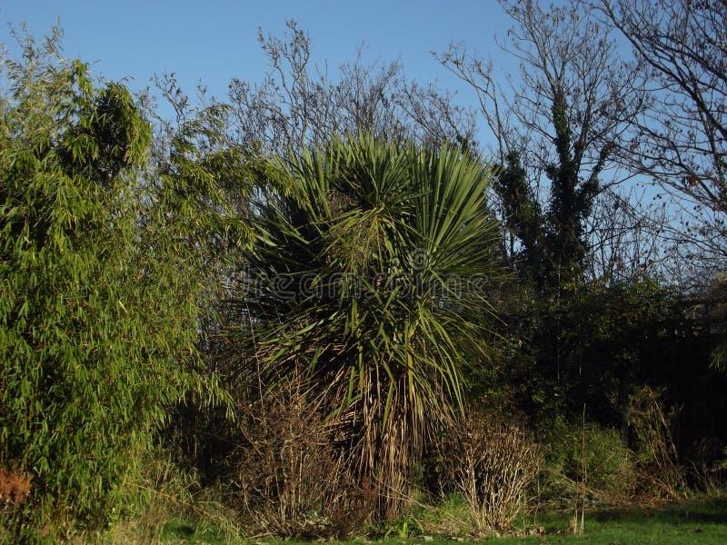 Кустарник пальмы стоковая фотография rf