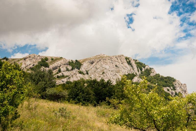 Кусты и трава на наклоне горы стоковая фотография rf