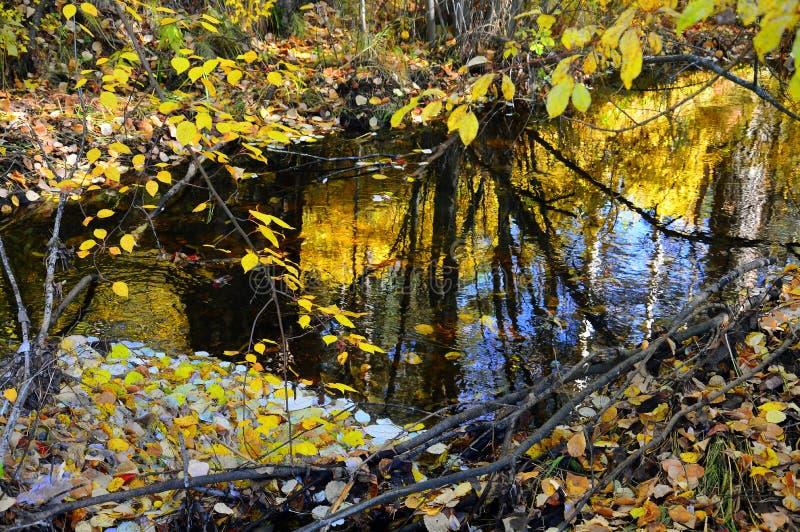 Кусты осени на банке потока леса wildlife таблица сквош собрания осени цветастая стоковая фотография rf