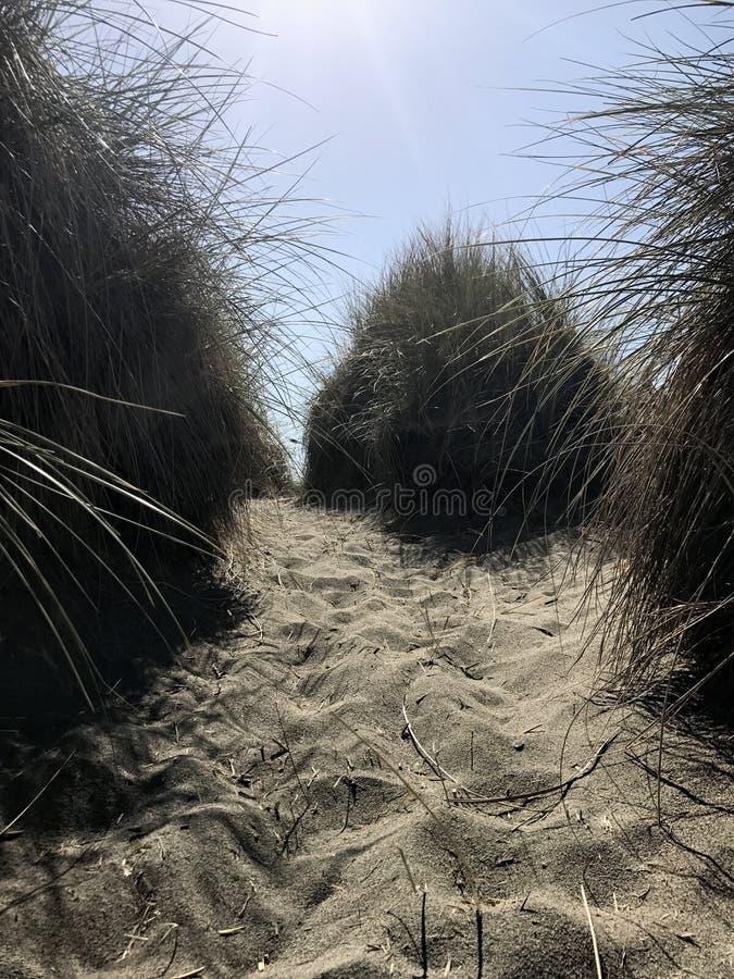 Кусты песка стоковые изображения