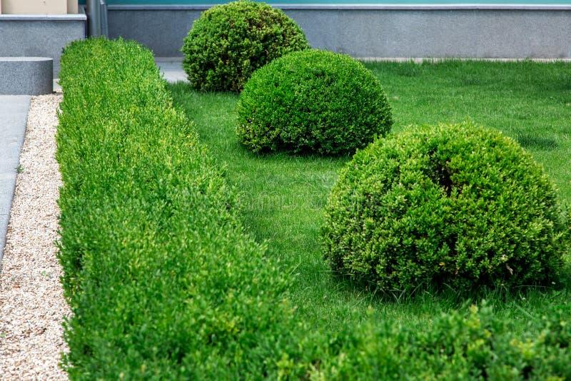 Кусты сада вечнозелены стоковые фотографии rf