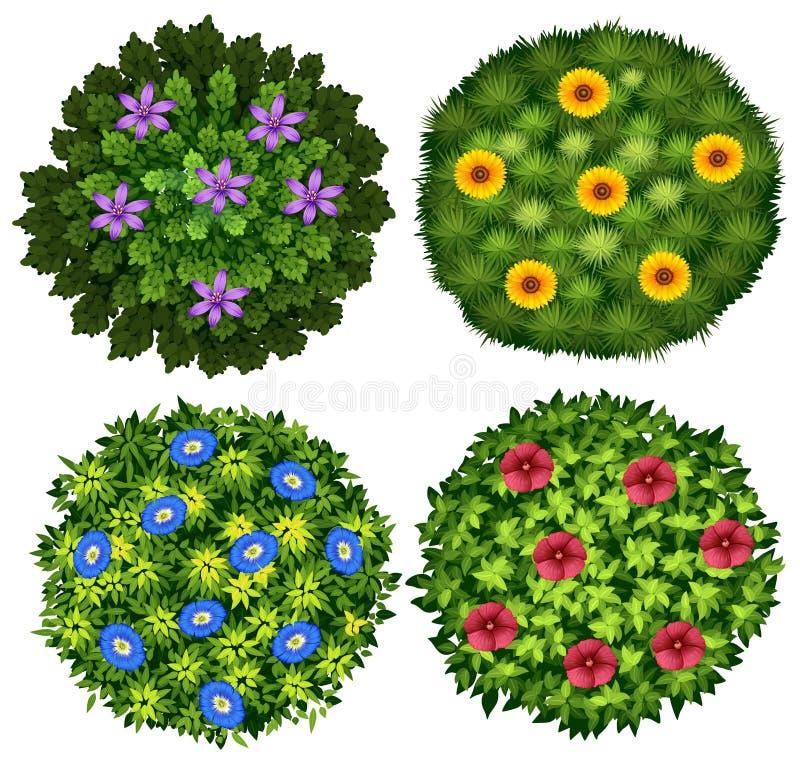 Кусты с красочными цветками иллюстрация штока