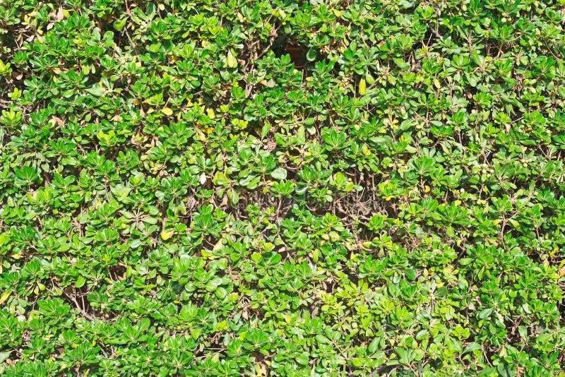 Куст уравновешенный зеленым цветом стоковые изображения