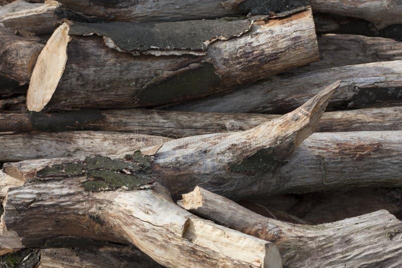 Куча ветви дерева, деревянной ручки стоковое фото rf