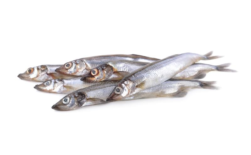 Куча всех круглых свежих рыб shishamo на белой предпосылке стоковая фотография rf