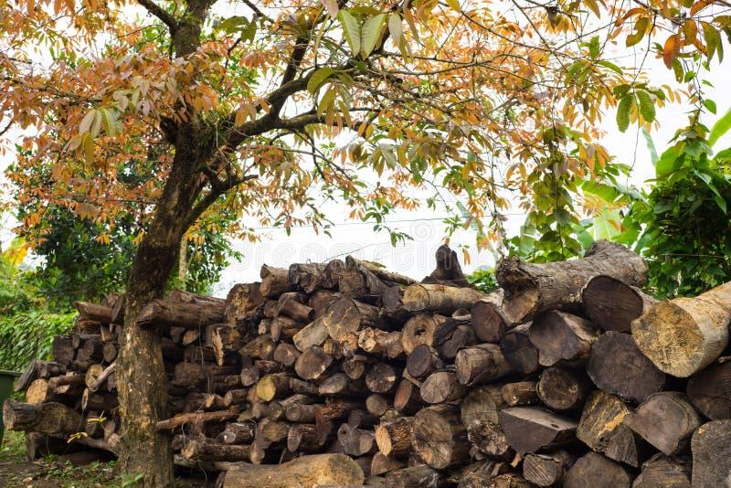 Куча древесины на земле под живущим деревом стоковая фотография