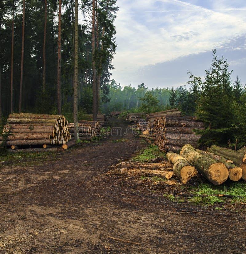 Куча древесины стоковое изображение rf