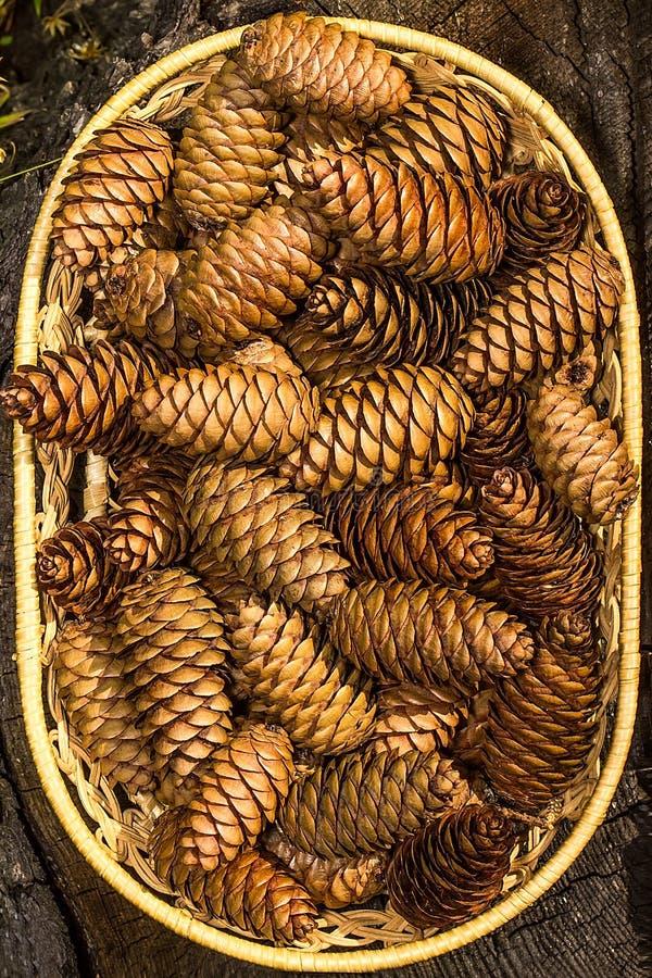 Куча деревянных конусов стоковые фотографии rf