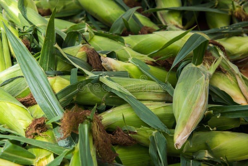 Куча зеленых кукурузных початков с шелухами и шелком стоковая фотография rf