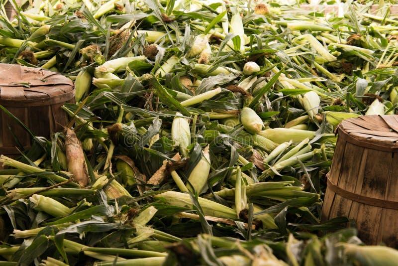 Куча зеленых кукурузных початков с шелухами и шелком стоковая фотография