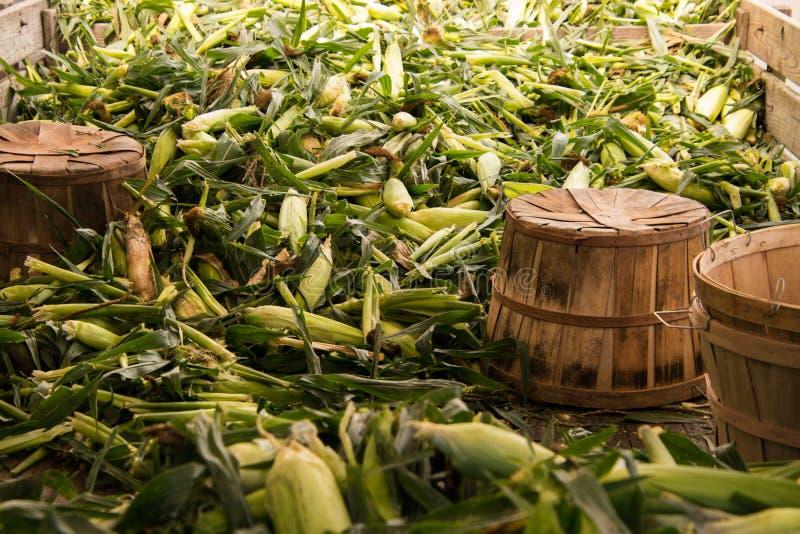 Куча зеленых кукурузных початков с шелухами и шелком стоковое фото rf