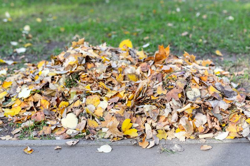 Куча золотых покрашенных упаденных листьев на зеленой траве на парке задворк или города в осени Предпосылка сезона падения стоковые фотографии rf