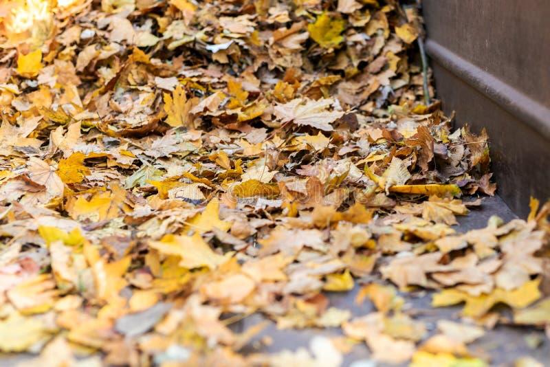 Куча золотых покрашенных упаденных листьев на зеленой траве на парке задворк или города в осени Предпосылка сезона падения стоковое фото rf