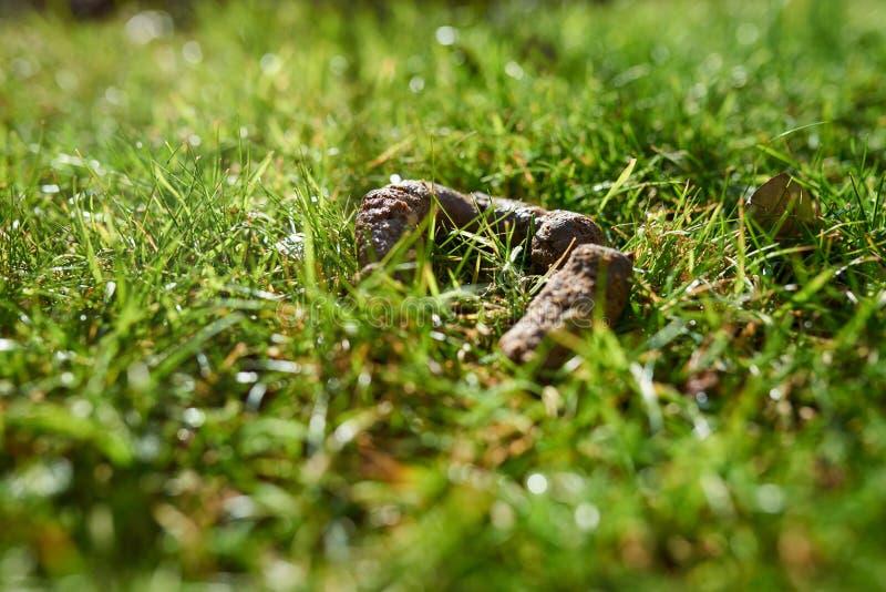 Куча кормы собаки в траве стоковые изображения