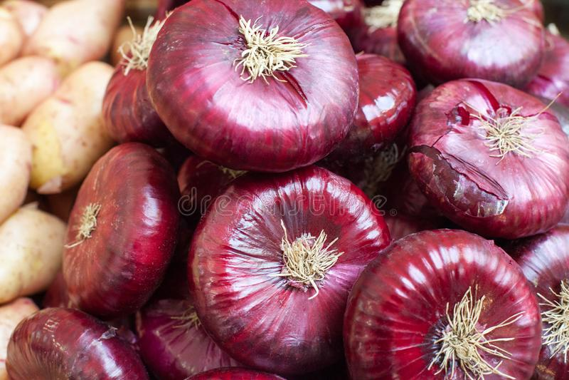 Куча красной сырцовой продажи луков на конце рынка вверх, шарик лука cepa лукабатуна с пурпурной кожей, Зеппелином разнообразия л стоковое изображение