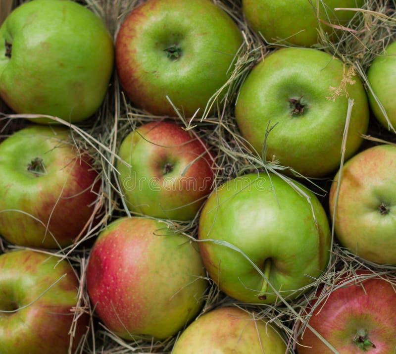 Куча красочных органических яблок во время времени сбора готова для клиентов стоковое изображение rf