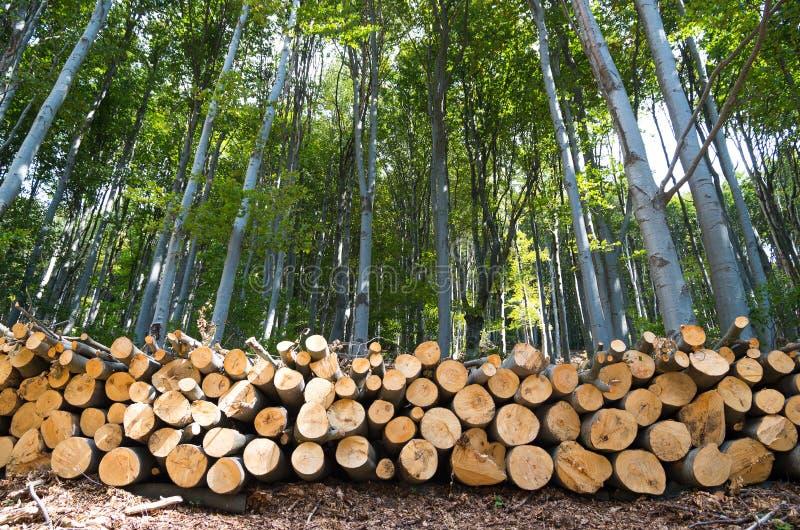 Куча леса бука деревянных журналов на краю леса стоковые фотографии rf