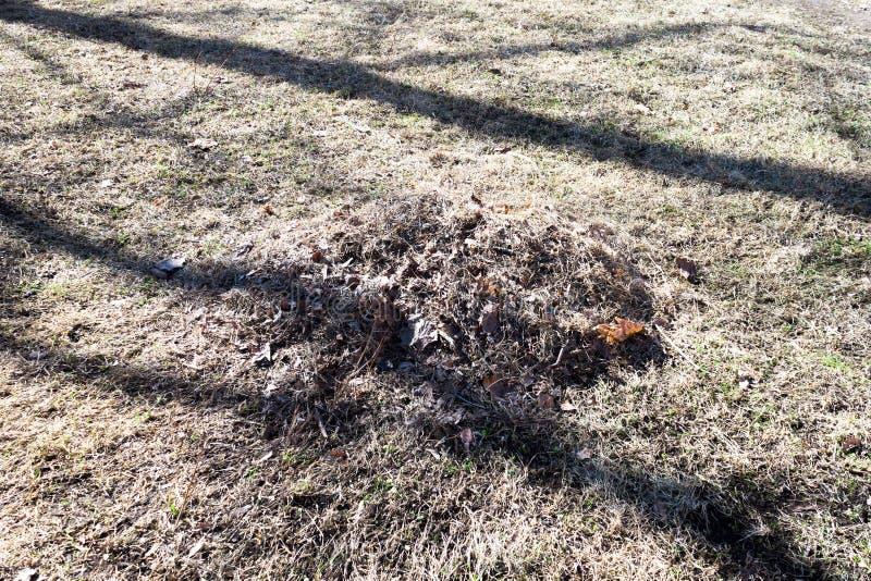 Куча листьев в траве стоковое изображение rf