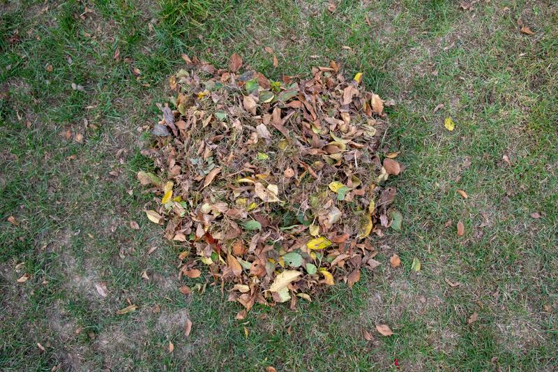 Куча листьев подметенных вместе с грабл на луге в саде листья идут в ведро стоковые изображения rf