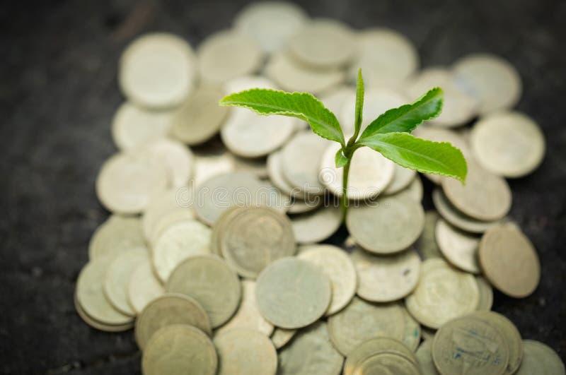 Куча монеток с заводом на верхней части для дела, деньгах роста денежной массы сохраняя Верхние монетки дерева к показанной конце стоковая фотография rf