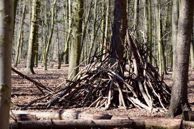 Куча древесины в лесе стоковые фотографии rf