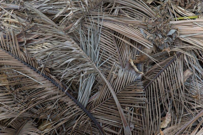 Куча сброшенных высушенных лист ладони стоковое изображение