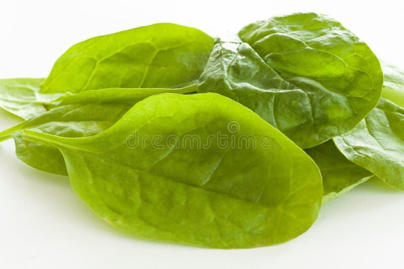 Куча свежих зеленых листьев шпината на белой предпосылке r стоковые изображения rf