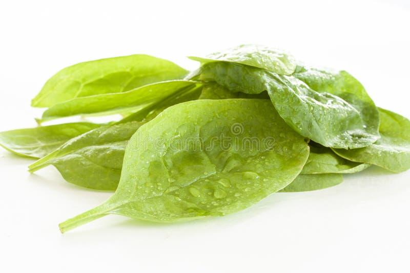 Куча свежих зеленых листьев шпината на белой предпосылке r стоковая фотография rf