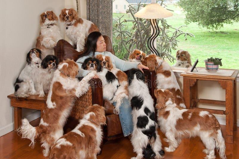 куча собаки стоковое изображение rf