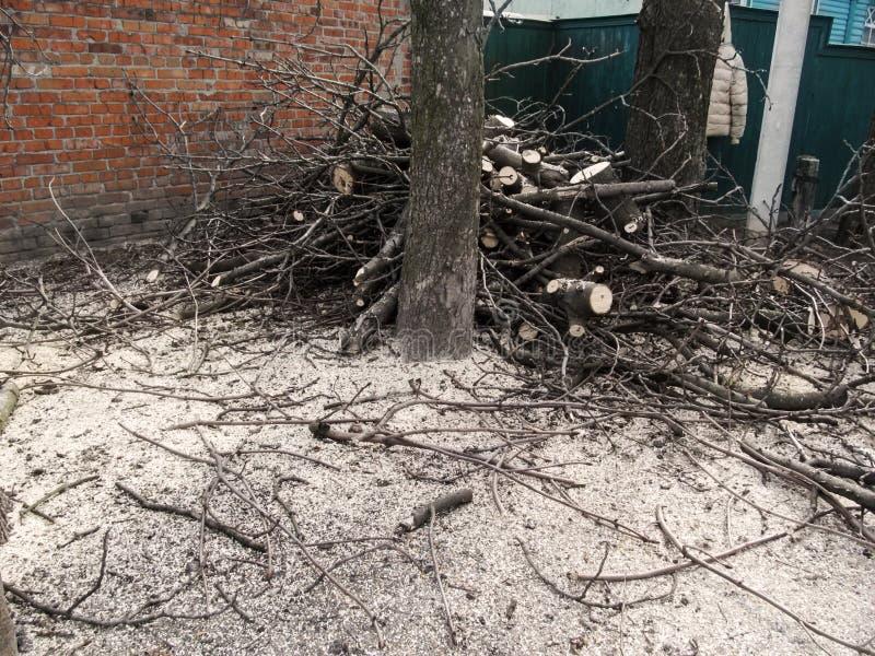 Куча спиленных- ветвей и земля посыпанная с опилк - результат подрезать деревья Концепция весны и осени стоковая фотография rf
