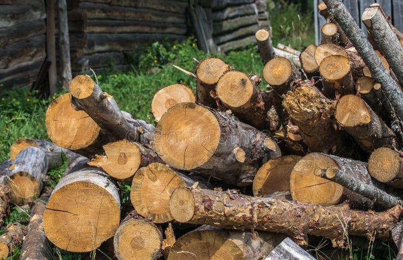 Куча спиленных хоботов старых деревьев на конце-вверх травы стоковое изображение rf