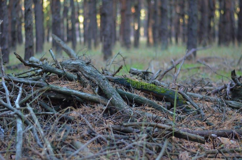 Куча старых разрушанных ветвей покрытых с мхом и иглами лежит на том основании в стрельбе леса на уровне глаз Мягкое foc стоковые фото