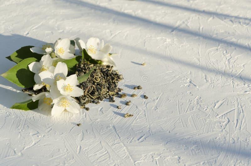 Куча сухих листьев зеленого чая и цветков свежего жасмина белых на белой поверхности в солнечности стоковые фото