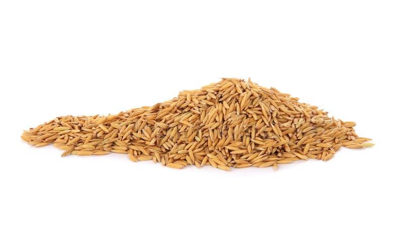 Download Куча сухого зерна падиа стоковое изображение. изображение насчитывающей сух - 41652061