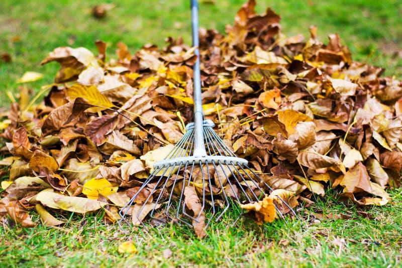 Куча упаденных листьев с грабл для удаления стоковое фото