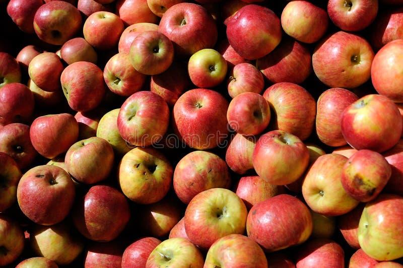 куча яблок стоковые фотографии rf