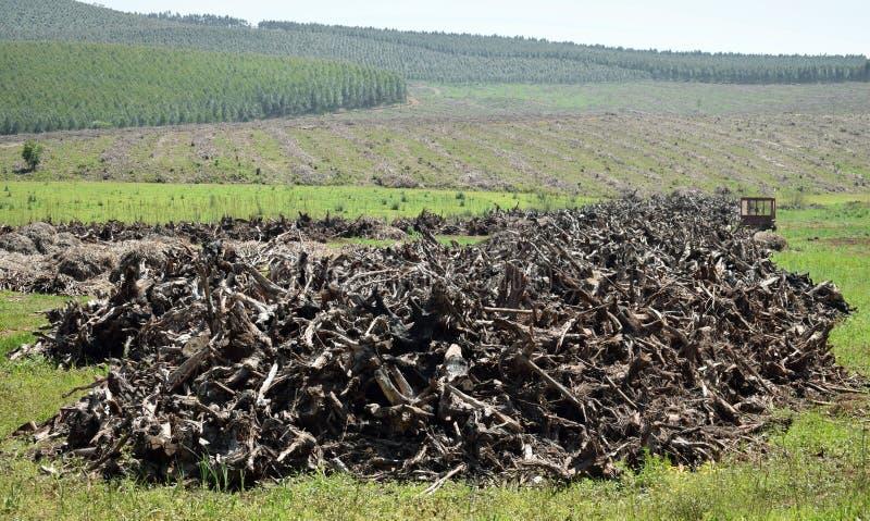 Кучи древесины стоковое фото rf