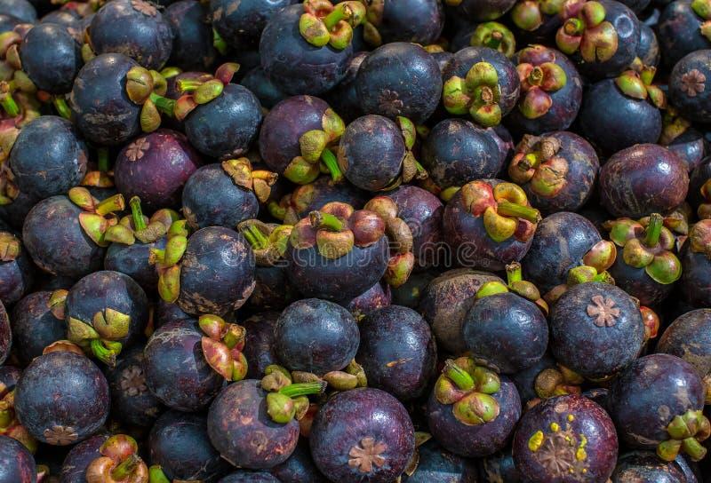 Свежий мангустан для продажи на на открытом воздухе рынке Кучи мангустана в одном кадре Мангустан индонезийский плод который имее стоковые изображения rf