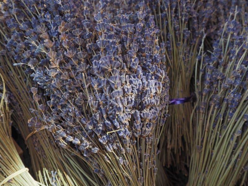 Кучи свежей лаванды стоковые фото